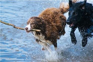 Geld verdienen als Dogsitter / Dogwalker